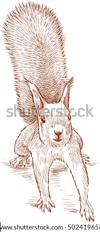 sketch of a funny squirrel