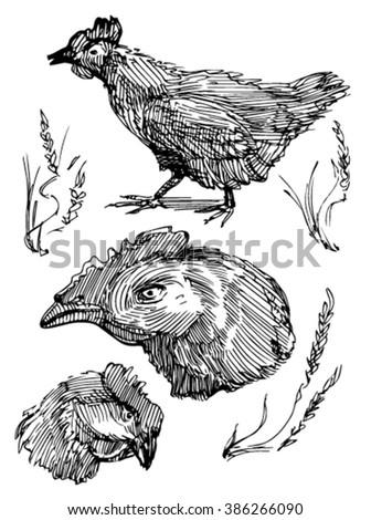 Sketch of chicken. - stock vector
