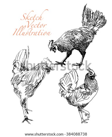 Sketch of chickens isolated on white - stock vector