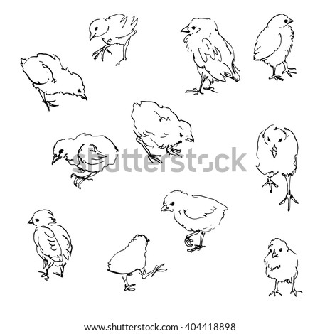 How to draw a baby chicken - photo#40