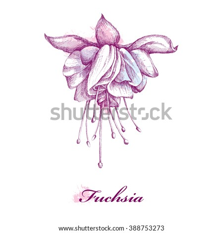 purple flower vector stock images royalty free images vectors shutterstock. Black Bedroom Furniture Sets. Home Design Ideas
