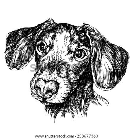 Sketch of funny Dog Dachshund. Vector Illustration - stock vector