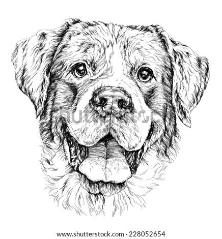 Sketch of funny shepherd dog. vector illustration. - stock vector