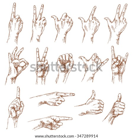 Sketch of hand gestures. Set of the different positions of the hands: count , victory sign, Shaka, okay,  pointing gesture, thumbs-up,  closed fist. - stock vector