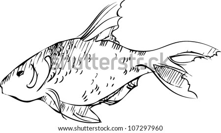 sketch of inhabitant of reservoirs of earth of large fish