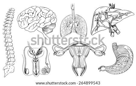 Sketch internal body organs black white stock vector 264899543 sketch of internal body organs in black and white ccuart Choice Image