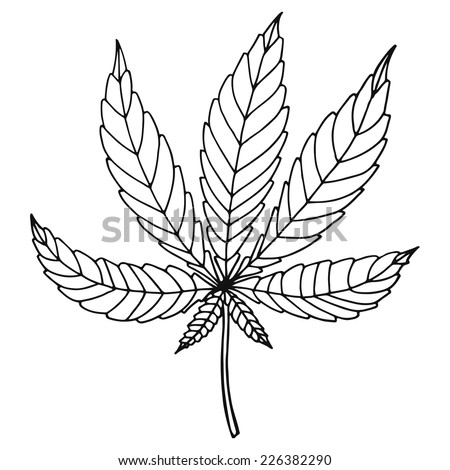 Sketch of marijuana isolated on white background. Vector illustration of a sheet of hemp. - stock vector