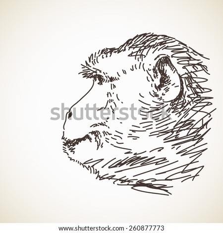 Sketch of monkey head Hand drawn vector illustration