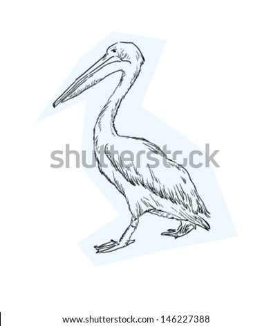 Sketch of Pelican - stock vector