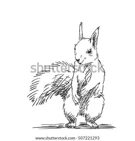 Squirrel Sketch Stock Images Royalty Free Images Vectors