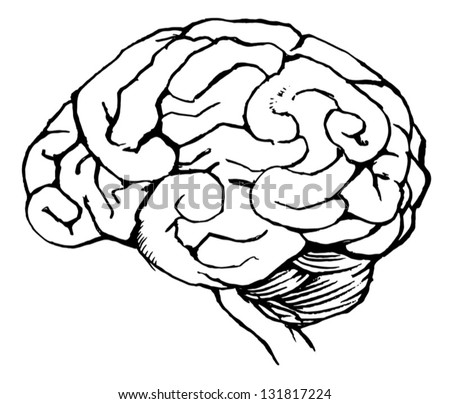 Sketch of the human brain