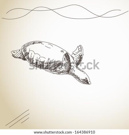 Sketch of turtle Vector illustration - stock vector
