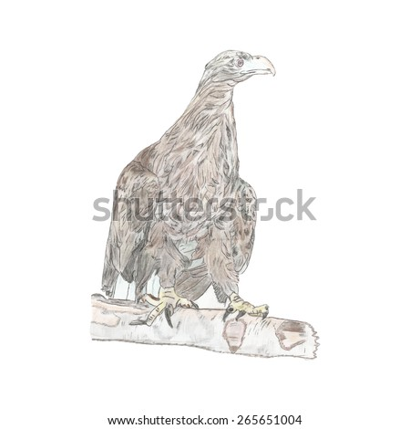 Sketch of white-tailed eagle. Vector illustration - stock vector