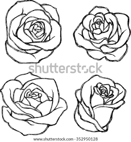 Rose Sketch Stock Images, Royalty-Free Images & Vectors | Shutterstock