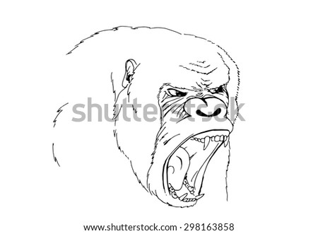 Sketch screaming chimp. The alpha male. Vector illustration. - stock vector