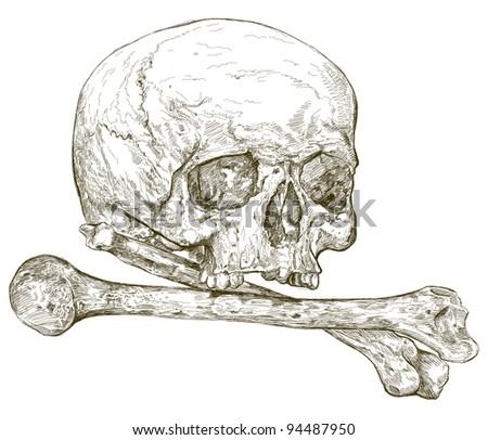 skull and crossbones - detailed vector drawing - stock vector