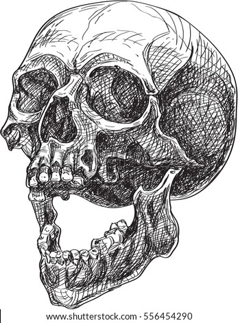 Skull side view in engraving style. Can be used for tattoo