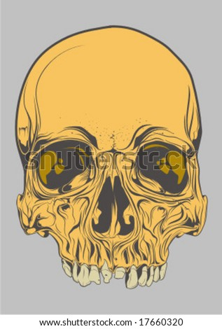 skull vector detail - stock vector