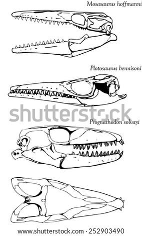 Skulls of three different mosasaurs (set) - stock vector