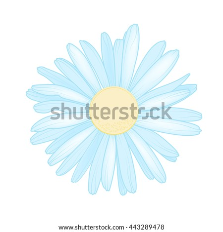 Sky blue chamomile daisy close up top view. Loves me loves me not flower. Isolated botanical floral design element. - stock vector