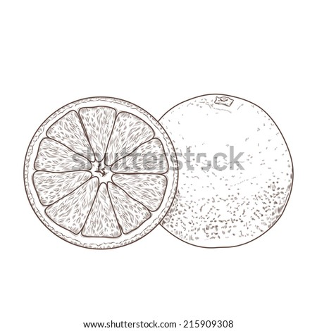 Sliced orange fruits isolated on a white background. Hand drawn line art. Retro design. Vector illustration. - stock vector