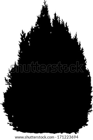small black fir tree isolated on white background