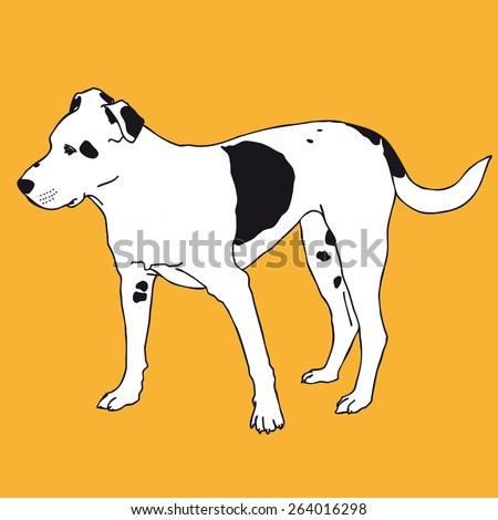 Smart black and white dog. Smart dog. Darling dog. Man's best friend. Black and white doggy. Crafty and sly doggie. Flatten isolated illustration master vector.
