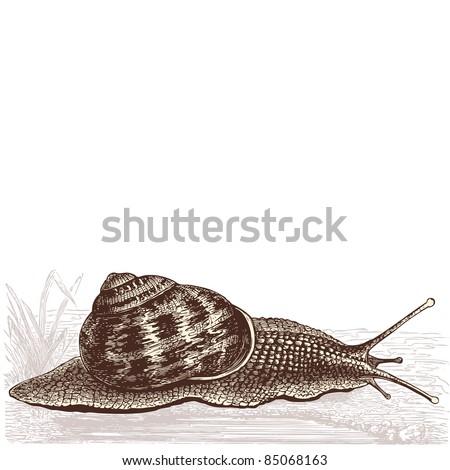 "snail - vintage engraved illustration- ""Cent récits d'histoire naturelle"" by C.Delon published in 1889 France - stock vector"