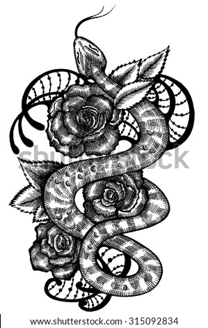snake snake and roses snake tattoo snake sketch snake graphics stock vector. Black Bedroom Furniture Sets. Home Design Ideas