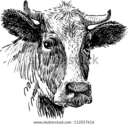 Snout Cow Stock Vector 112057616 - Shutterstock