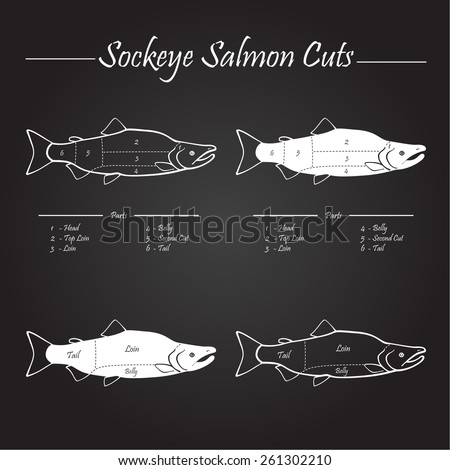 Sockeye Pacific salmon cutting diagram illustration, white on chalkboard - stock vector