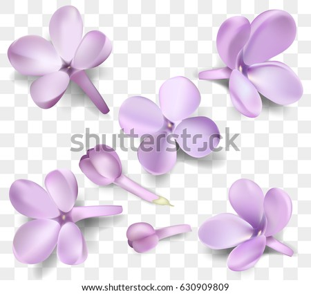 Soft Pastel Color Floral Collection Isolated On Transparent Background Purple Lilac Flowers And Petals Watercolor