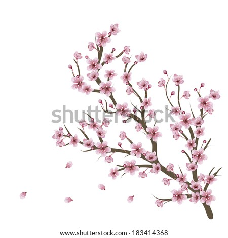 Soft pink cherry blossom flowers on branch over white background. - stock vector