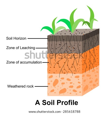 Soil profile diagram for children for Soil formation