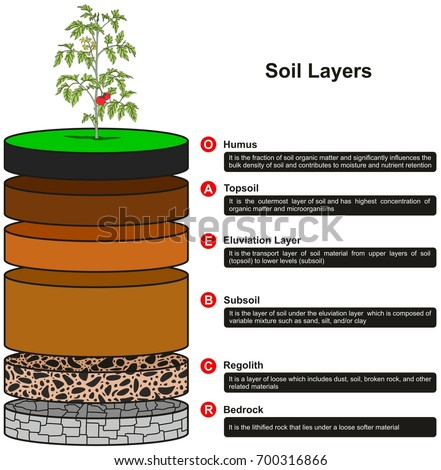 Soil layers infographic diagram showing slices stock for Soil definition geology