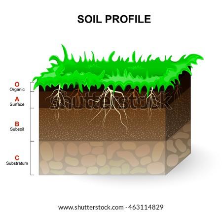 Soil profile soil horizons piece land stock vector for Soil in english