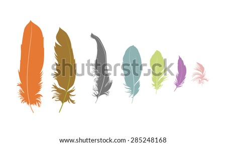 some feathers on white background - stock vector