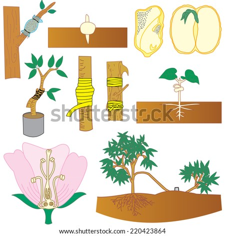 Sowing, pruning branches, connections and tree breeding. - stock vector