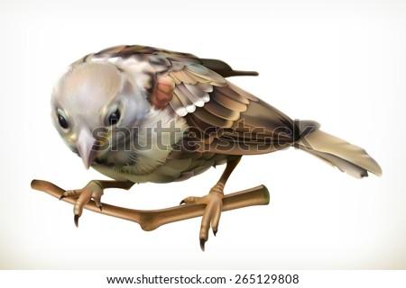 Sparrow, vector illustration - stock vector