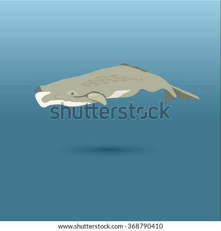 Sperm Whale into the sea / vector illustration / icon / whale, big whale, whales, whale on blue, whale, whale realistic, whale in sea - stock vector