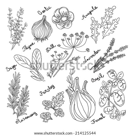Spices and herbs. Hand drawn vector illustration. - stock vector
