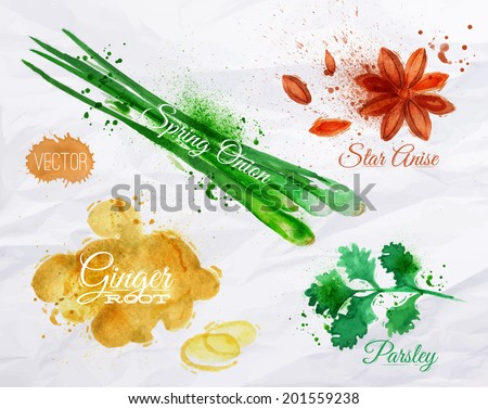 Spices herbs set drawn watercolor blots and stains with a spray star anise, parsley, spring onion, ginger root - stock vector