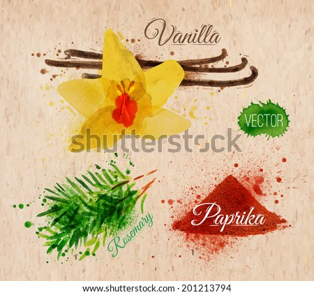 Spices herbs set drawn watercolor blots and stains with a spray vanilla, rosemary, paprika on kraft paper - stock vector