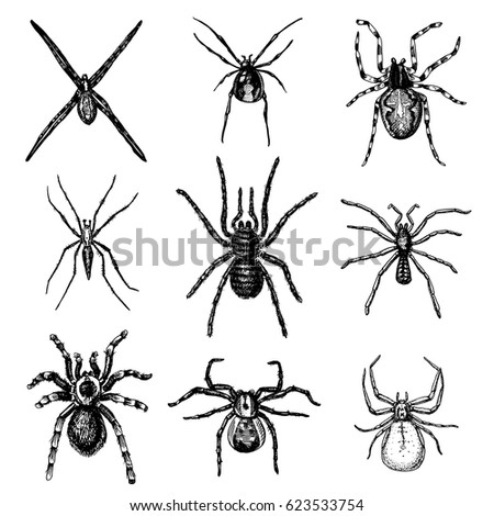 spider or arachnid species most dangerous insects in the world old vintage for halloween - Phobia Halloween