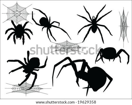 spider vector collection - stock vector