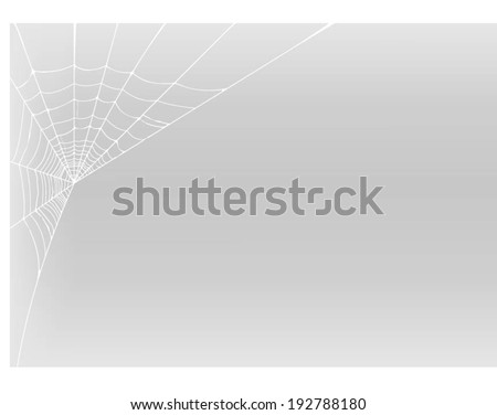spider web detailed vector illustration  - stock vector