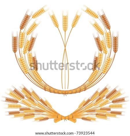 spikes of wheat - vector illustration - stock vector