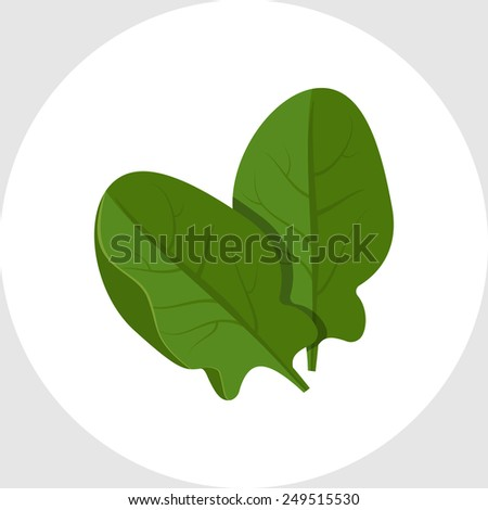 Spinach Stock Vectors, Images & Vector Art | Shutterstock