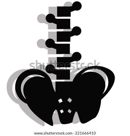 spinal cord and pelvis illustration - stock vector
