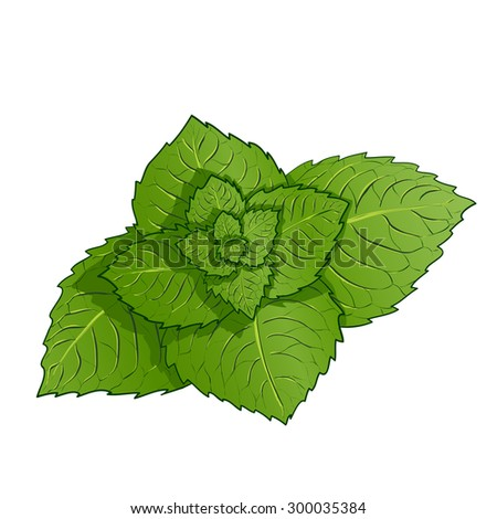Sprig of mint. Isolated on white background. Stock Vector.